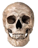 Skull - Ecocrime