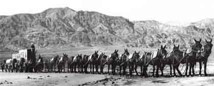 20 Mule Team - The Legend of Borax Charlie