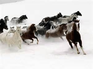 Mustangs - Wild Horses
